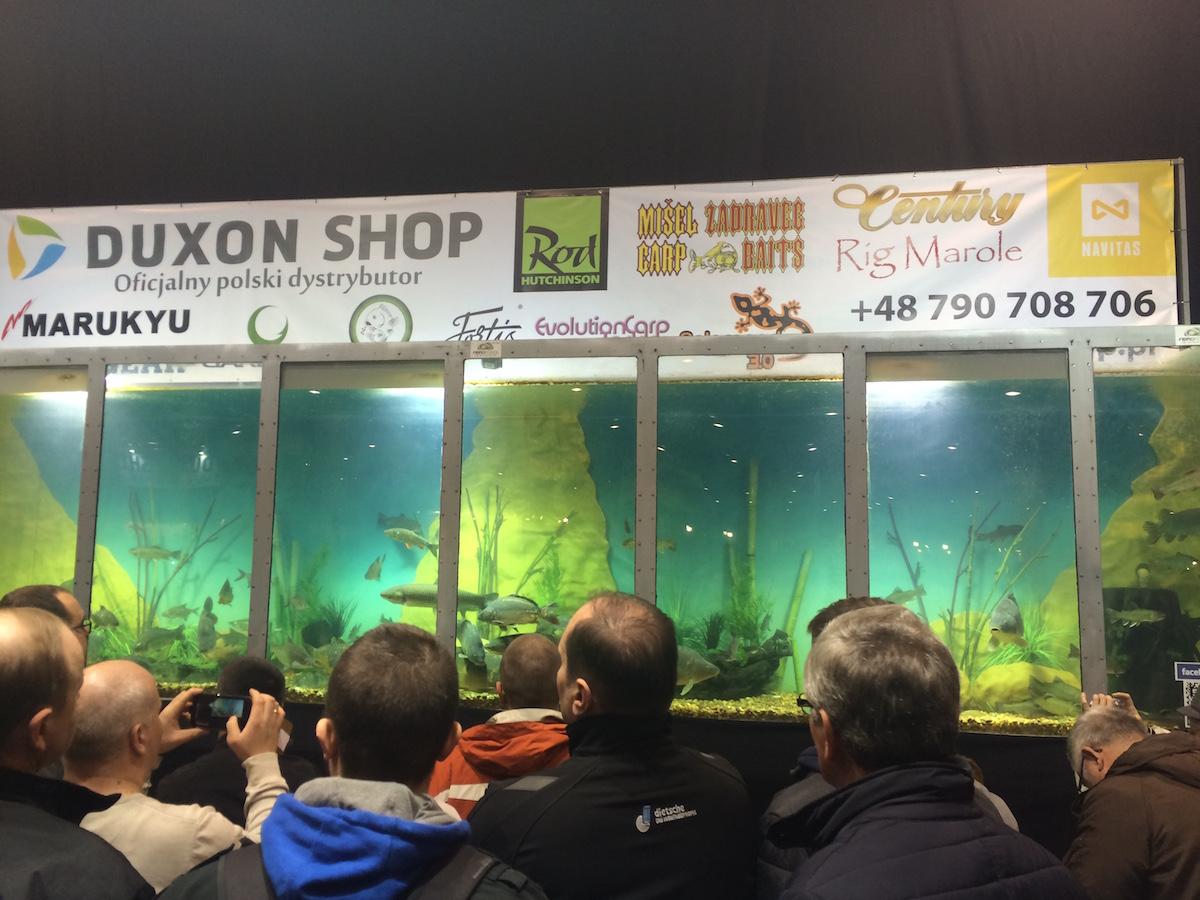 Ogromne akwarium targi rybomania 2016