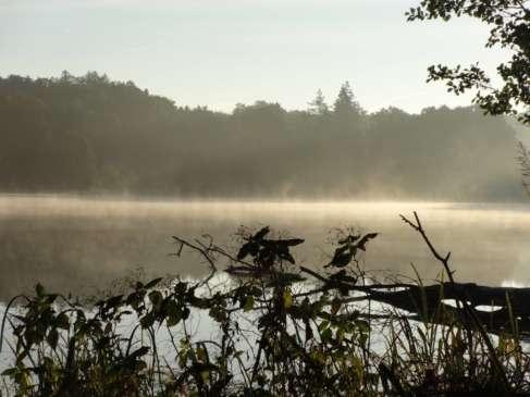 Widok Jezioro leśne
